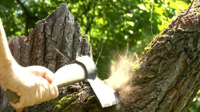 stock-footage-cutting-tree-with-axe